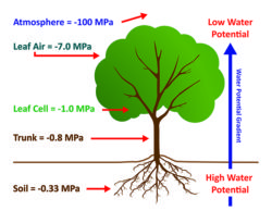 Soil Plant Atmosphere Continuum - Water Potential Gradient